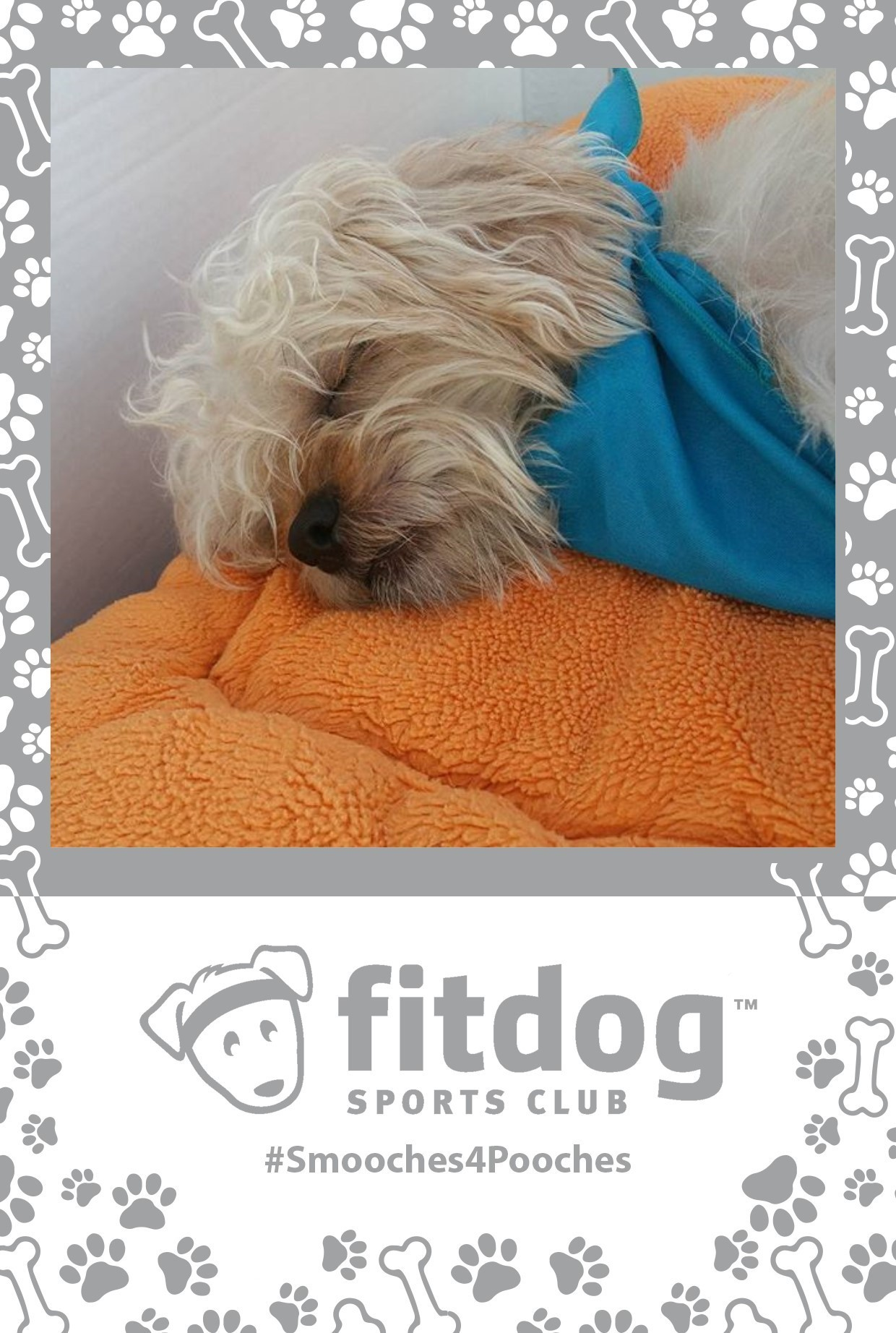 a hash tag print layout with a cute dog for fitdog sports club